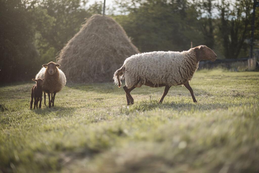 paysans_de_la_madeleine_ferme_animaux_potager